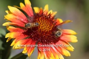 Bee_PaulVineyardProductions_OrangeHeader