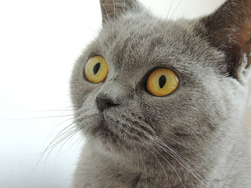 aware cat