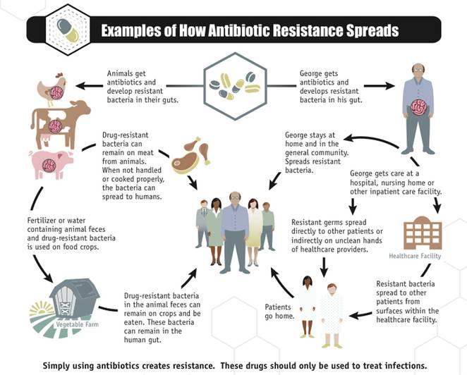 how_antibiotic_resistance_spreads